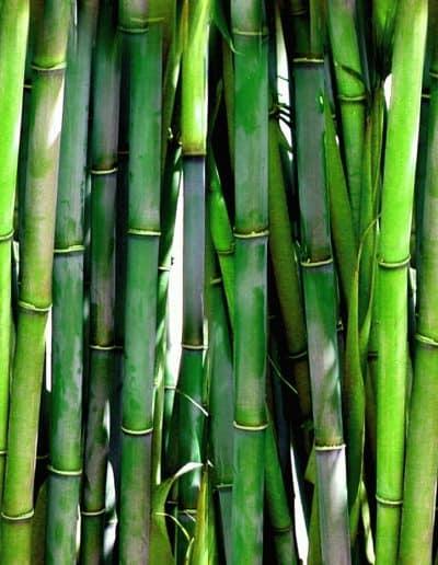 bamboo-20936_1280